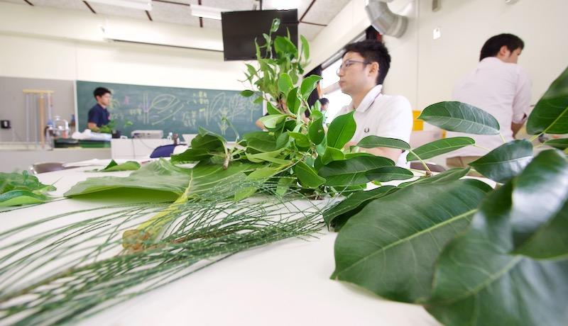 植物で遊ぼびまくろう!理科の先生のための「理科であそ部」第5回
