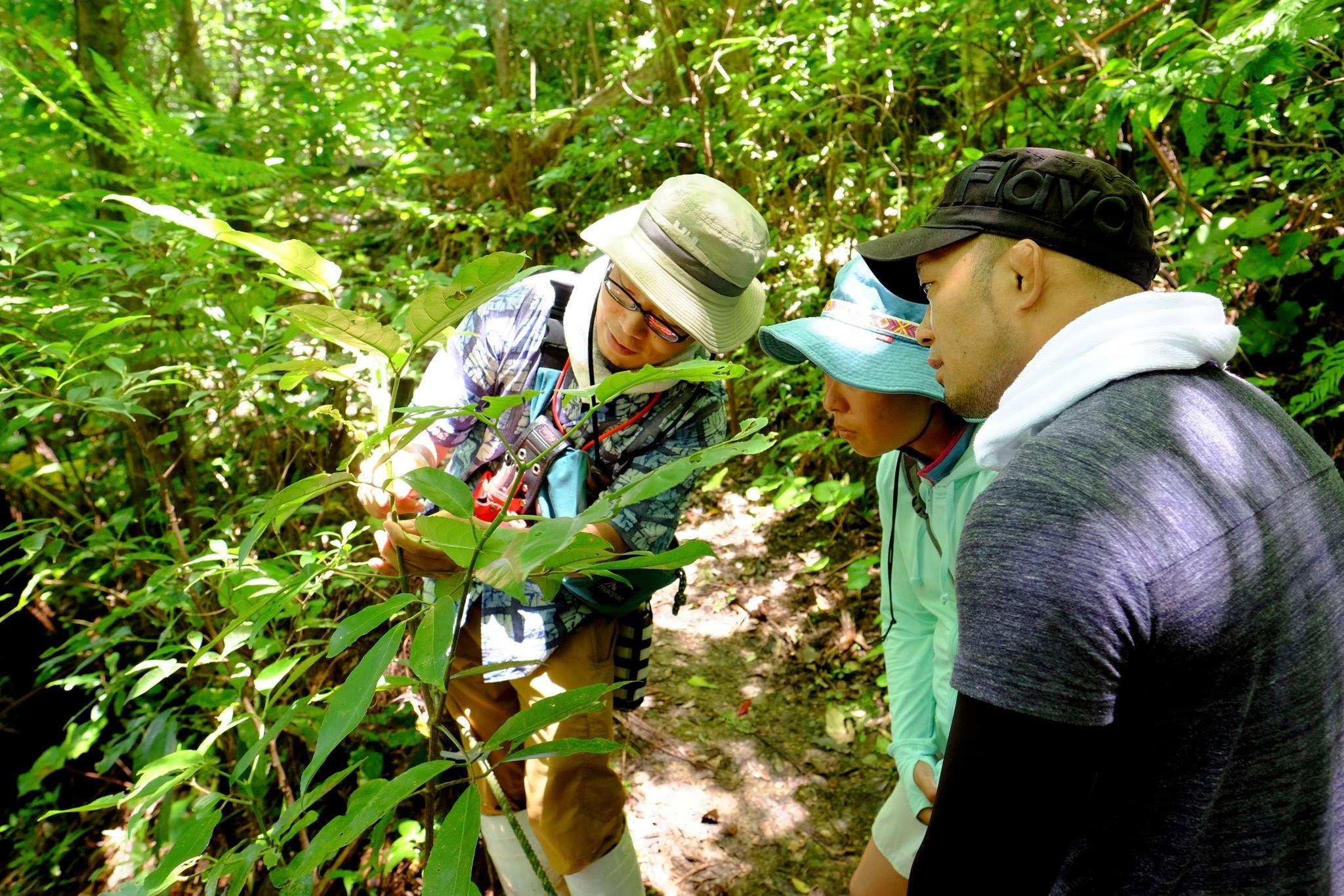 のんびり一人旅の沖縄旅行で、ガイドが同行するエコツアーへの参加が意外とおすすめな5つの理由