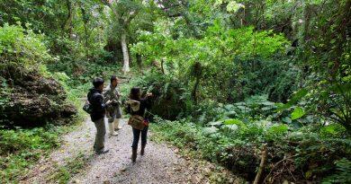 沖縄旅行をもっと楽しむ!島の自然を知る「エコツアー」をあなたが体験するべき3つの理由