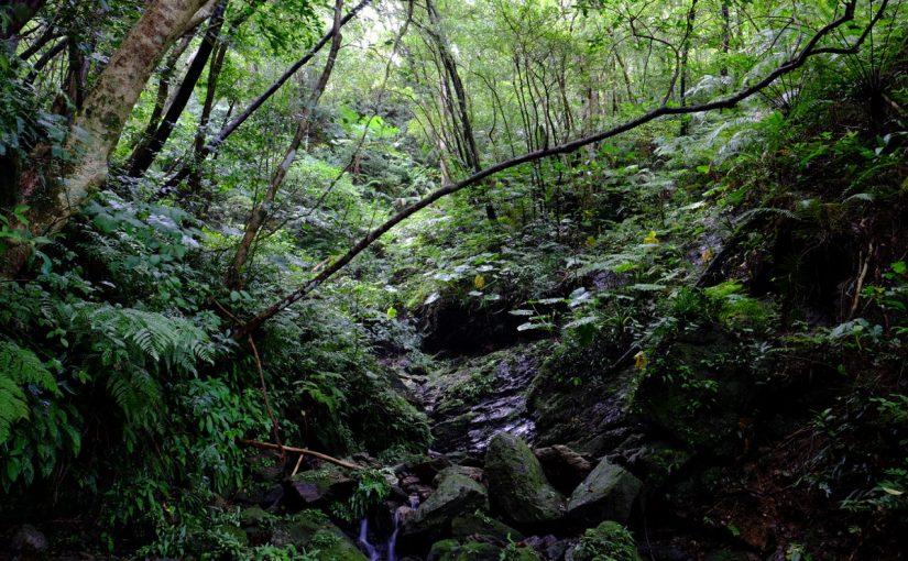 奄美群島・やんばる・西表島の世界自然遺産登録が見送りとなりそうな件について、ネイチャーツアーの会社として思うこと
